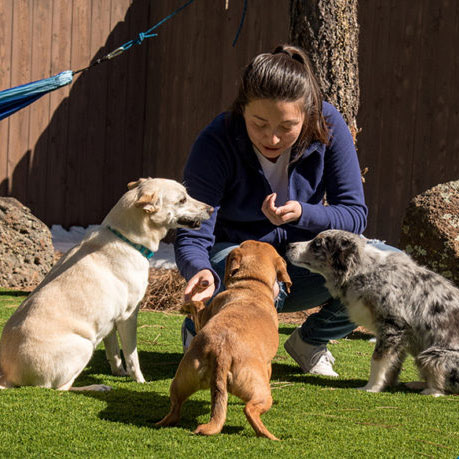three pet dogs on artificial turf