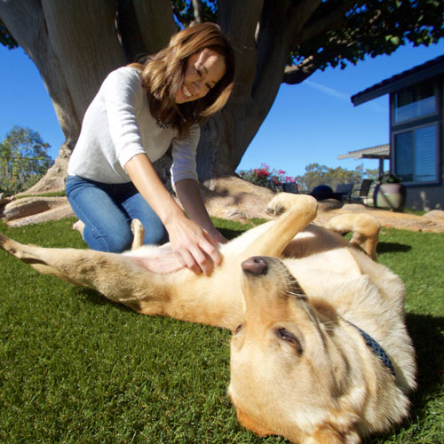 synlawn-pet-playing-on-turf-500px-square-web